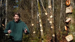 An Introduction to Bread Stapled To Trees [Official Music Video]