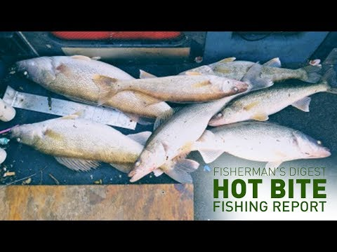 Pig Walleyes On Lake Erie And More!!! - Hot Bite Fishing Report - Nov. 6th