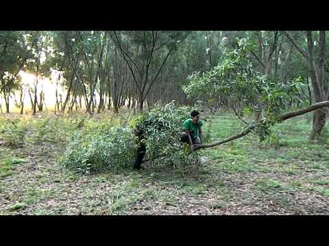 A trip to Bangalore's HMT forest Part - 1!!
