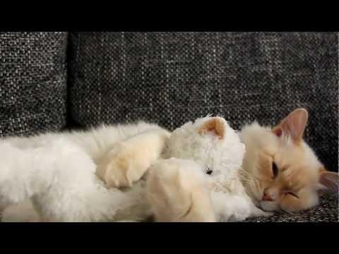 cat hugs his teddy bear