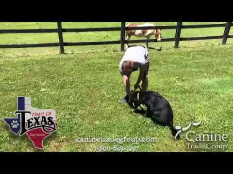 Dog Training Dallas, Forth Worth Dog Trainer | Heart of