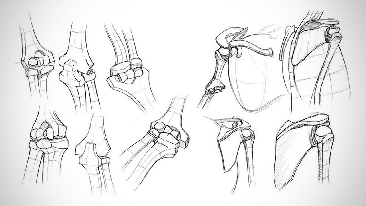 Anatomy Critiques - Types of Joints - YouTube