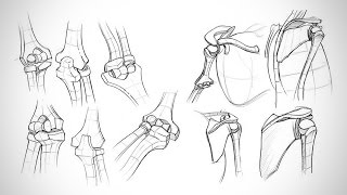 Anatomy Critiques - Types of Joints