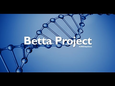 Strategy for Bettas development with Superior Genetics
