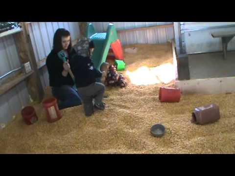 "Pumpkin farm ""corn"" sandbox - Part 3"