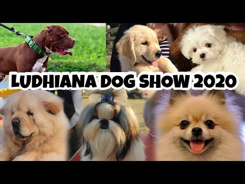 Ludhiana Dog Show 2019 | DOG PRICE IN INDIA, Punjab | Kennel Club | #MTGVLOGS #51