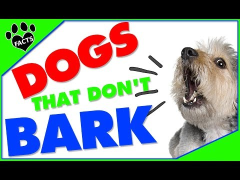 Top 10 Quietest Dog Breeds
