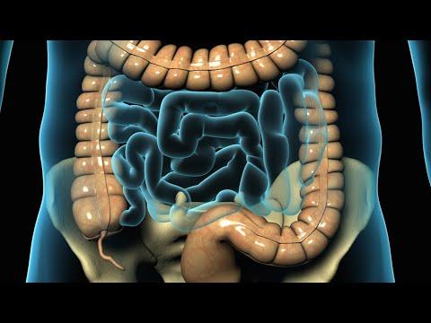 donde se encuentra el apendice y cual es su funcion
