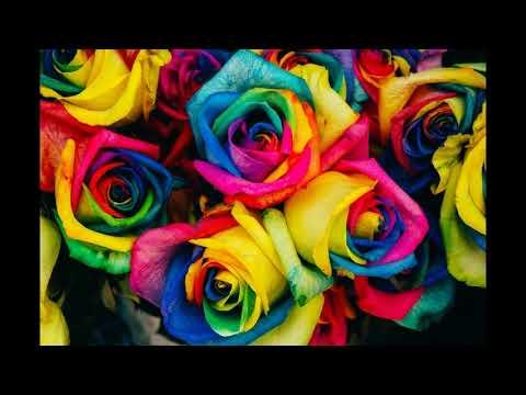 Download Flower  146