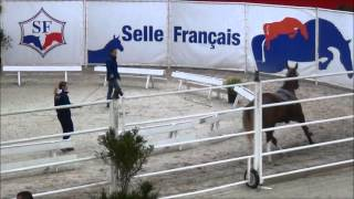 FOR SALE - 2012 Selle Français Mare bred by Ogano Sitte x Aiglon Rouge
