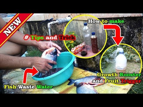 How To Make Liquid Fish Fertilizer To Boost Growth And Fruit Trigger By Grafting Examples