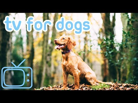 NEW TV for Dogs with Relaxing Music 2019! Helped 10 Million Dogs!
