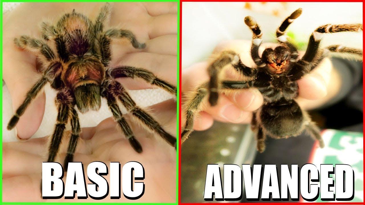 CUTE SPIDER!? - How I Hold My Pet Tarantula | EMZOTIC