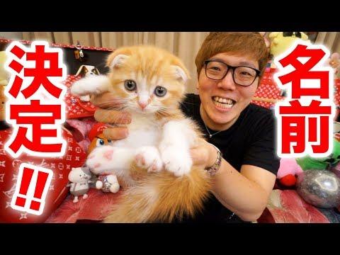 猫の名前が決まりました!【ヒカキンTV】【ねこ cat】