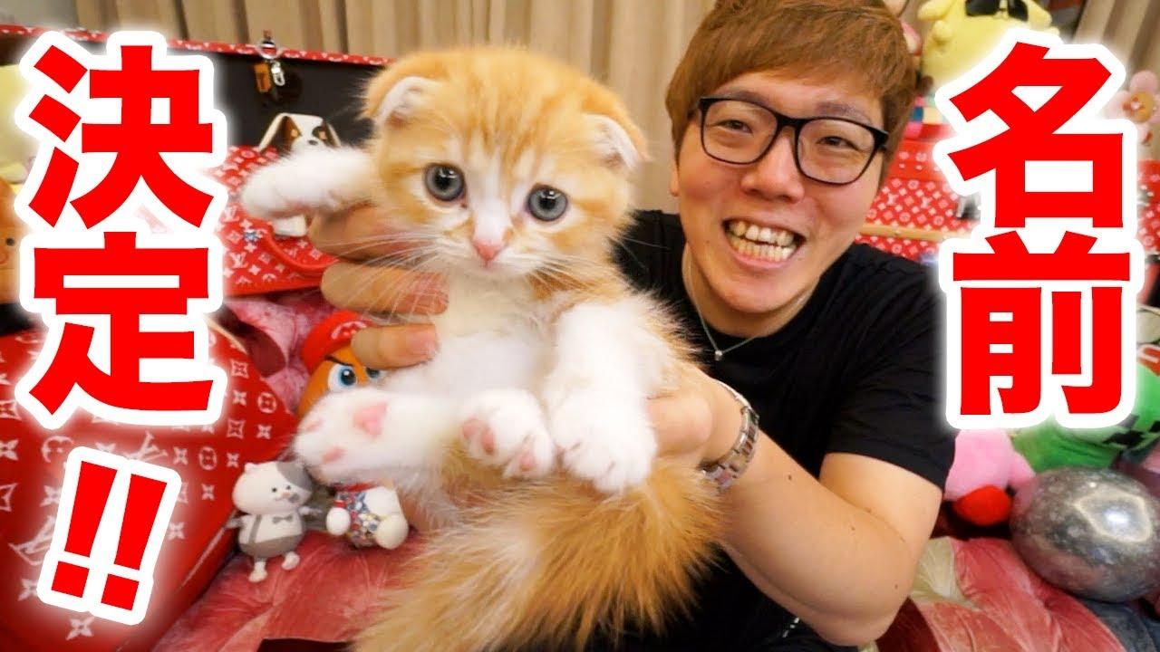 まるお cat 猫