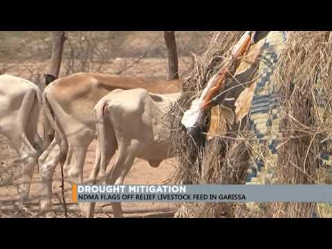 NDMA flags off relief livestock feed in Garissa