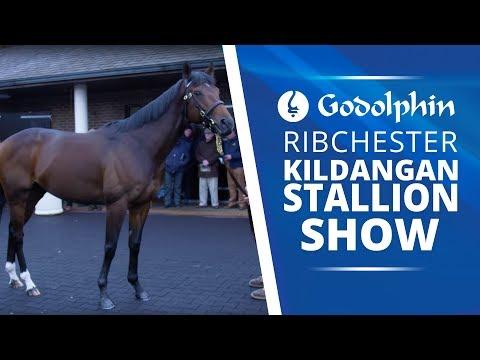 Richester star of the show at Kildangan Stallion Show
