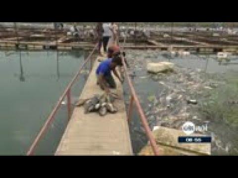 الكشف عن أسباب ظاهرة نفوق ملايين الأسماك في العراق  - نشر قبل 4 ساعة