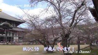 奈良東大寺の大仏さまは、聖武天皇のご発願により建立された。 いまでも...