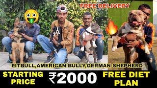Cheapest Dog Market in Delhi   Dog Market Delhi NCR   Pitbull American bully German shepherd