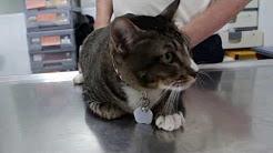 A cat has back ache