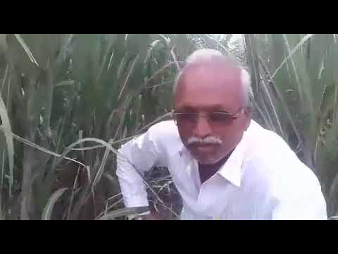 Green planet result use grow nitroking bhoomi power premium only