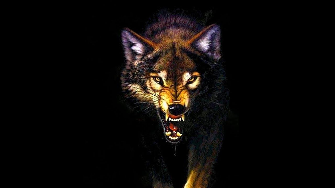 Owl City - Wolf Bite (...