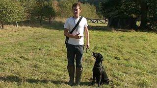 Gundog training: The basics and benefits