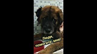 Спасение собаки в тяжёлом состоянии Анонс Бедная душа в приюте для бездомных животных shorts