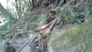 裾野市黄瀬川三竜の滝が五竜の滝に甦る 20180207