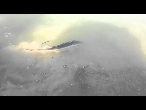 Fishofthesea társkereső