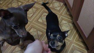 VLOG Собаки и Соседи. Подают в суд