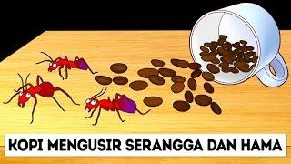 Semut Takkan Mendekati Rumahmu Jika Kamu Punya Ini