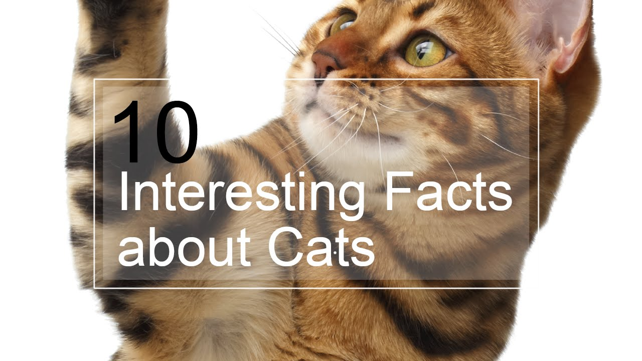 104 Interesting And Fun Cat Facts