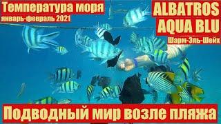 Египет 2021 Шарм Эль Шейх Albatros Aqua Blu Подводный мир возле пляжа Замеры температуры моря
