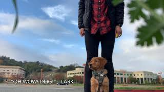 Ignoring other Dogs #1 - Lark - Katie's Critters