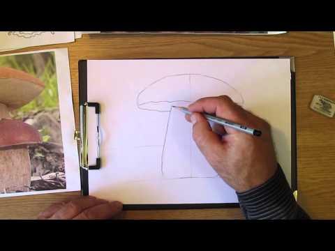 как нарисовать гриб шампиньон карандашом