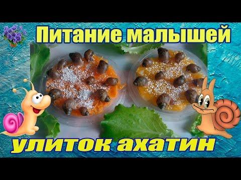 Питание маленьких улиток ахатин в домашних условиях