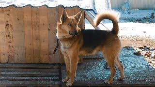 Приют для бездомных животных в Оренбурге