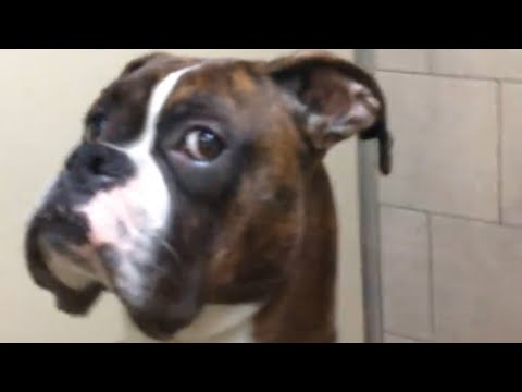 Thumbnail: Dog Keenly Eyes Owner