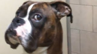 Dog Getting Picked Up From The Vet Gives Owner This Look