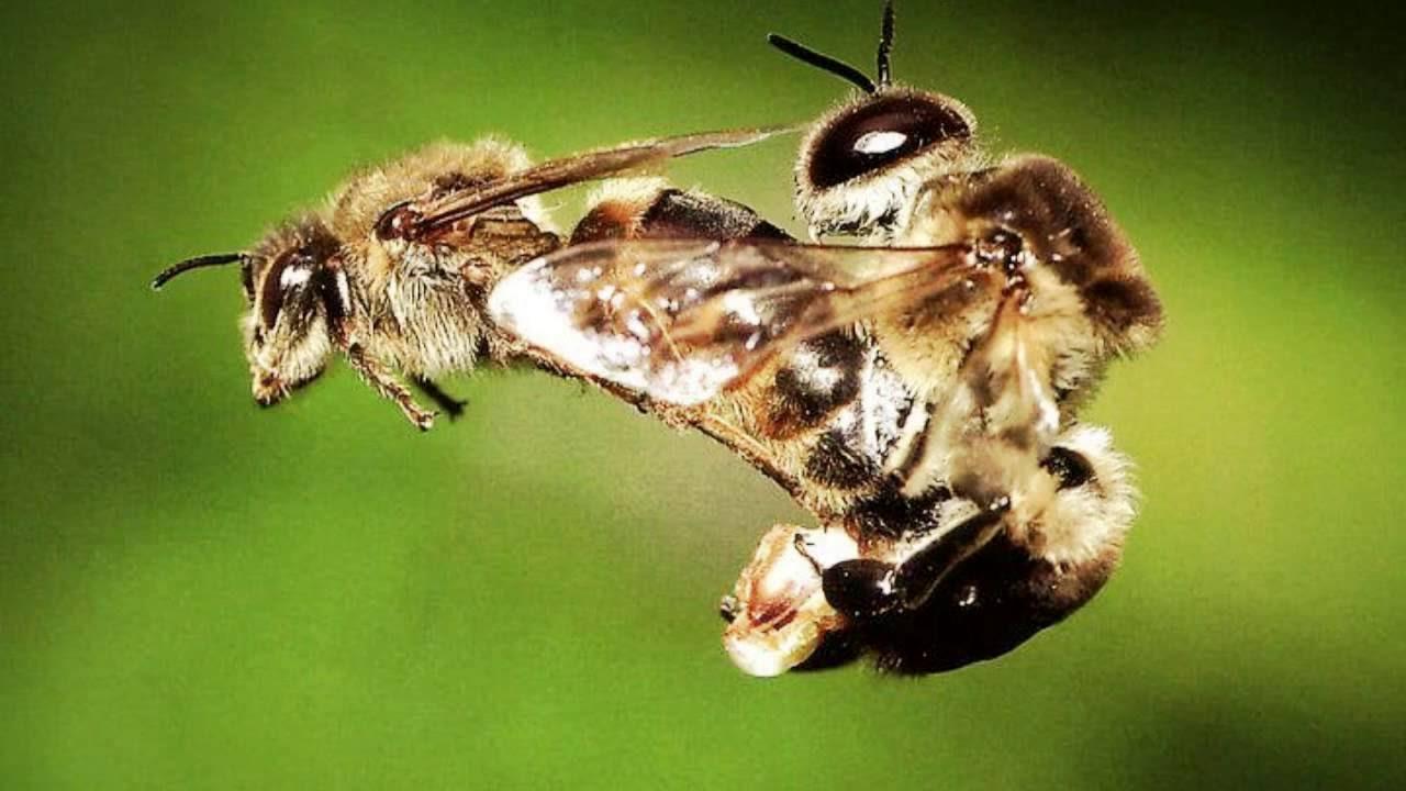 ¡Datos fascinantes sobre las abejas!