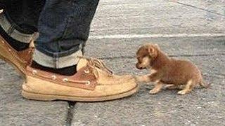 Die kleinsten Tiere der Welt!