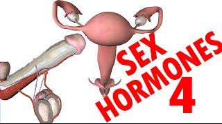 Sex Hormones - Testosterone & Estrogen - Endocrine System #4