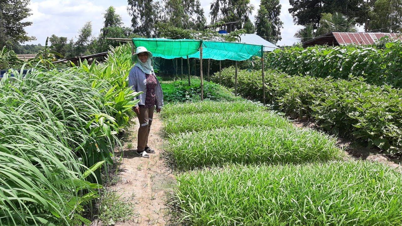 สุดยอดเกษตรยุคใหม่!!พื้นที่2งานทำเกษตรผสมผสานครบวงจร