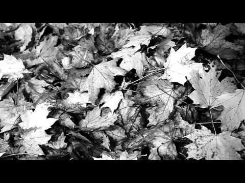 Moz - Herbstwind
