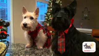 A Very Scottie Christmas