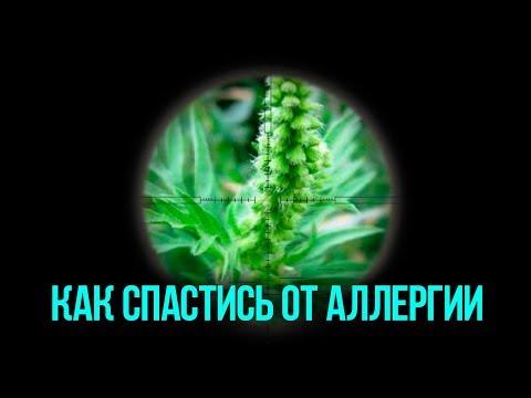 Как спастись и Вылечиться от аллергии на АМБРОЗИЮ и другие цветения. Прощай ПОЛЛИНОЗ!