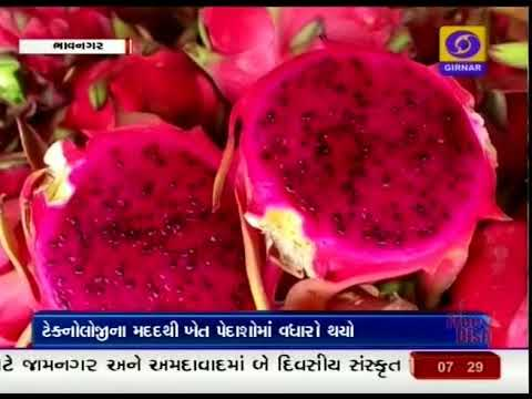 123 Modern Farming I Ground Report Gujarati I Bhavnagar