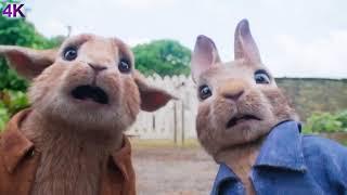 Peter Rabbit - 2018 - 3 CARD MONTE